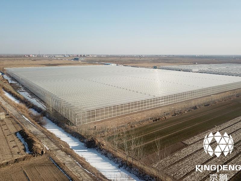 Tomato Production Greenhouse, De Zhou, China