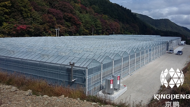 Tomato Production Greenhouse, Japan