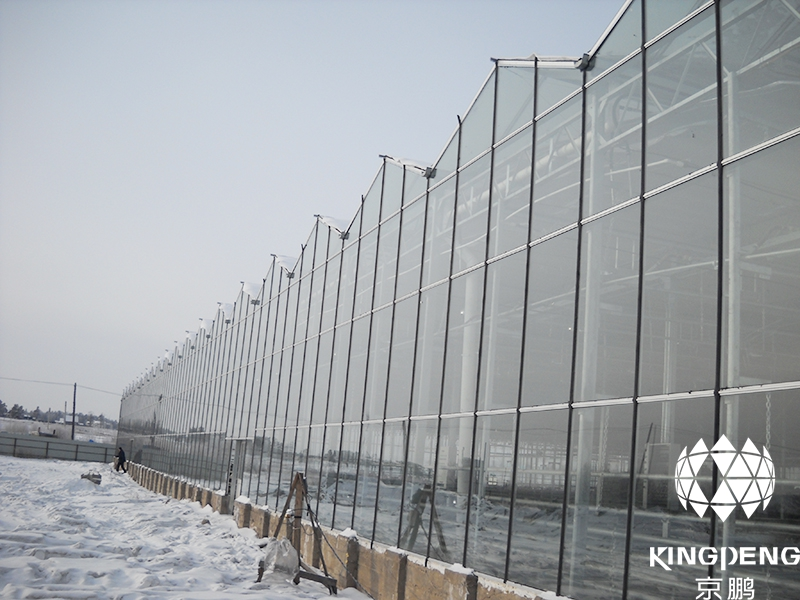 Cucumber Production Greenhouse, Ulan-Ude, Russia