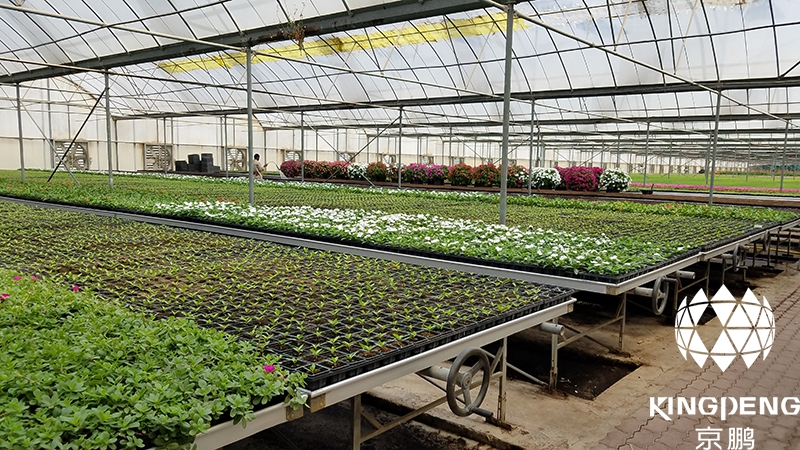 Nursery Greenhouse, Qatar